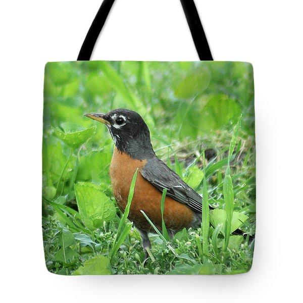 Robin 370 Tote Bag
