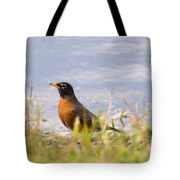 Robin Viewing Surroundings Tote Bag