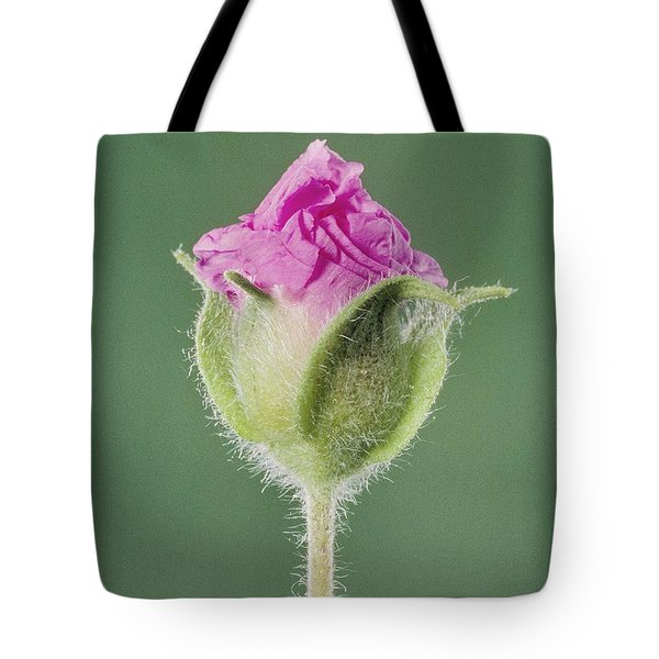 Rockrose Flowerbud Tote Bag by Claude Nuridsany and Marie Perennou