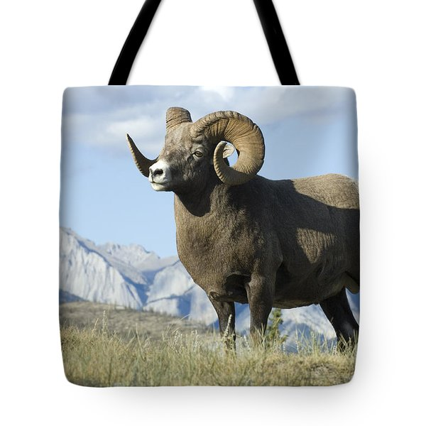 Rocky Mountain Big Horn Sheep Tote Bag by Bob Christopher