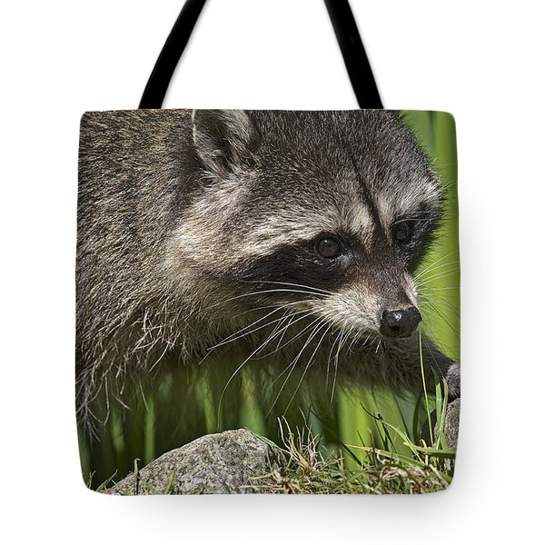Rocky Raccoon Tote Bag by Sharon Talson