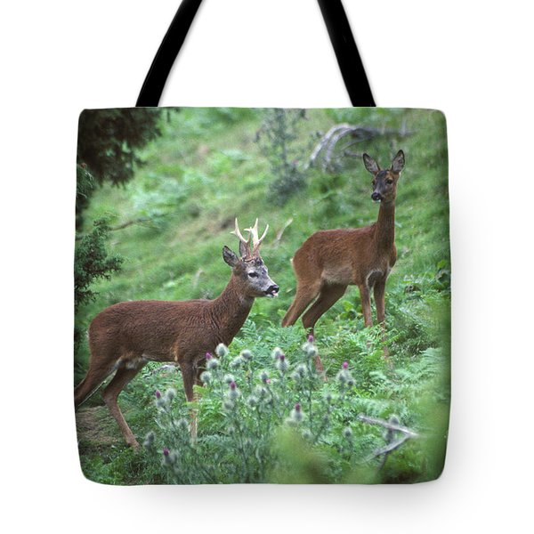 Tote Bag featuring the photograph Roe Buck And Doe Together by Phil Banks