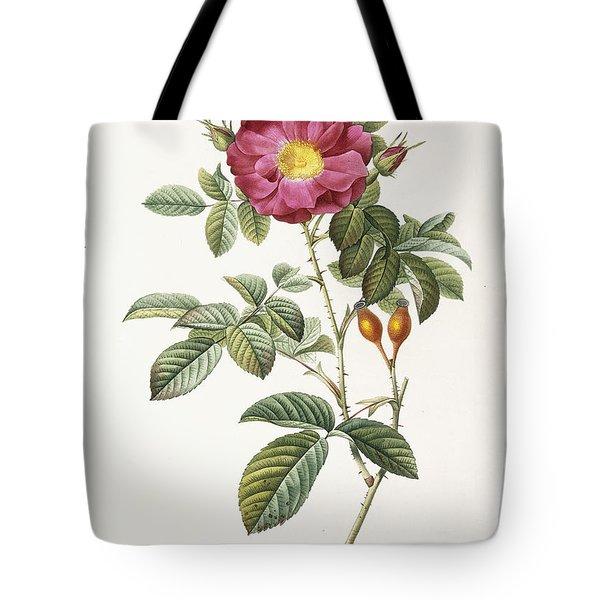 Rosa Damascena Coccina Tote Bag by Pierre Joseph Redoute