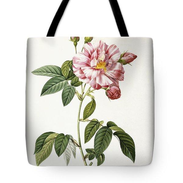 Rosa Gallica Versicolor Tote Bag by Pierre Joseph Redoute
