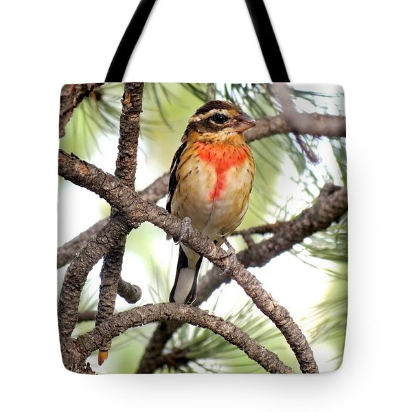 Rose-breasted Grosbeak Tote Bag