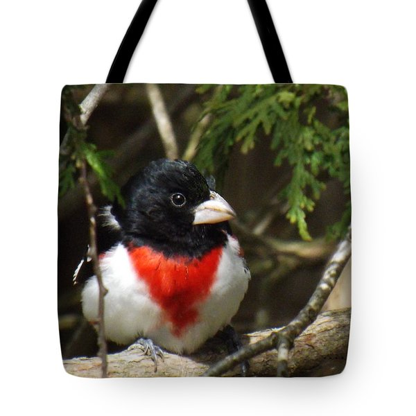 Rose Breasted Grosbeak Perched Tote Bag