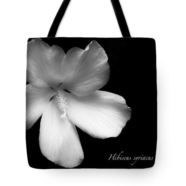 Rose Of Sharon Hibiscus Bw Tote Bag
