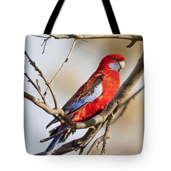 Crimson Rosella 1 - Australia Tote Bag