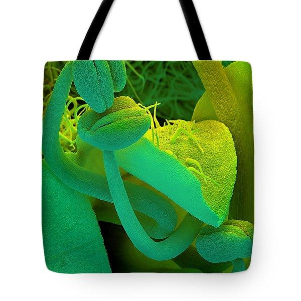 Rosemary Sem Tote Bag by Spl