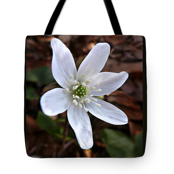 Tote Bag featuring the photograph Wild Round-lobe Hepatica by William Tanneberger
