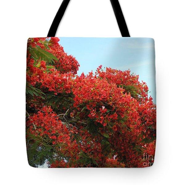 Royal Poinciana Branch Tote Bag
