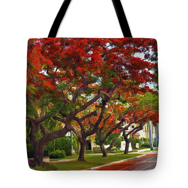 Royal Poinciana Trees Blooming In South Florida Tote Bag