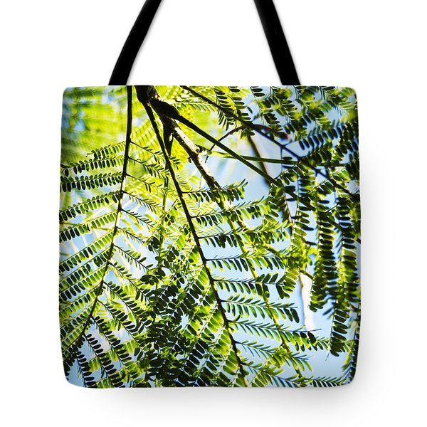 Royal Poinciana Tree Tote Bag by Charmian Vistaunet