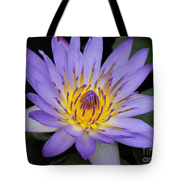Royal Purple Water Lily #4 Tote Bag