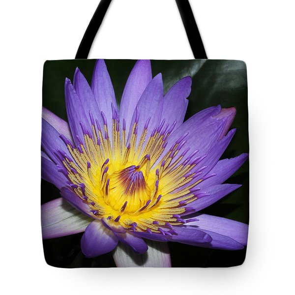 Royal Purple Water Lily #6 Tote Bag