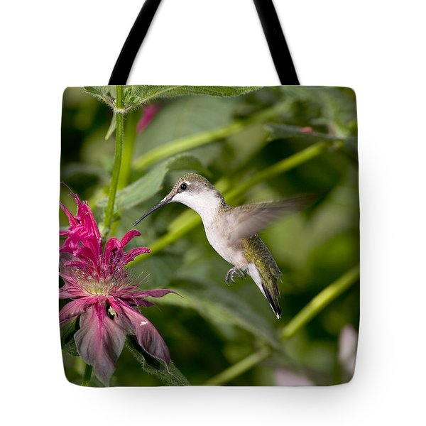 Ruby-throated Hummingbird Tote Bag by Gregory K Scott