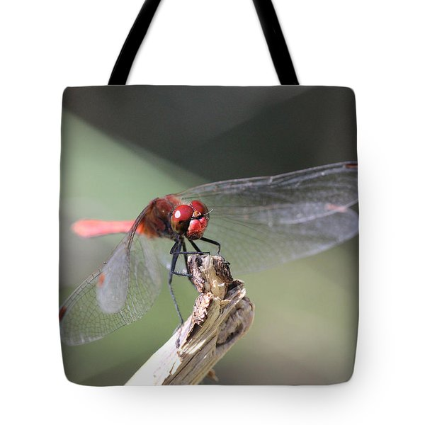 Tote Bag featuring the photograph Ruddy Darter Dragonfly - Sympetrum Sanguineum by Jivko Nakev