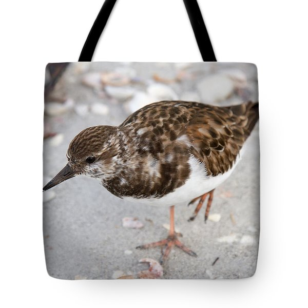Tote Bag featuring the photograph Ruddy Turnstone by Chris Scroggins