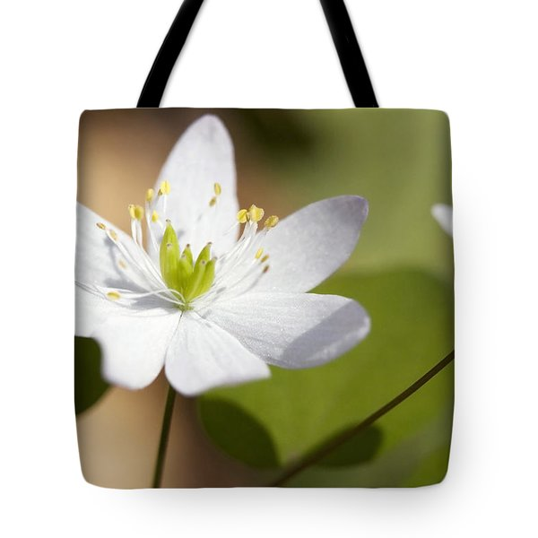 Rue Anemone Tote Bag by Melinda Fawver