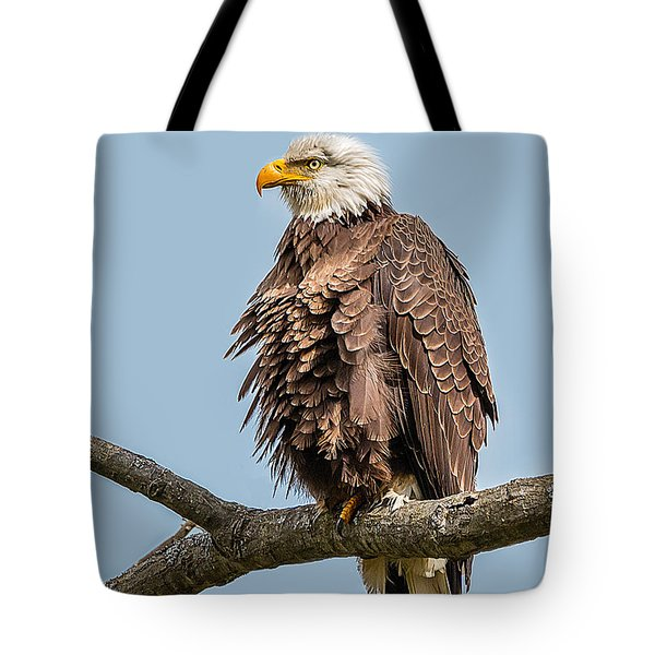 Ruffled Feathers Bald Eagle Tote Bag