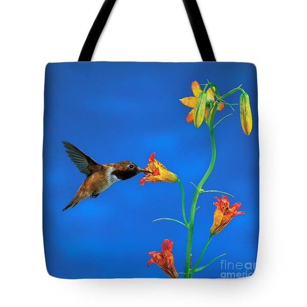 Rufous Hummingbird Tote Bag by Anthony Mercieca