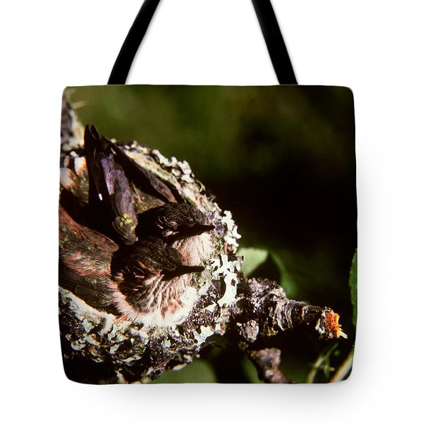 Rufous Hummingbirds In Nest Tote Bag