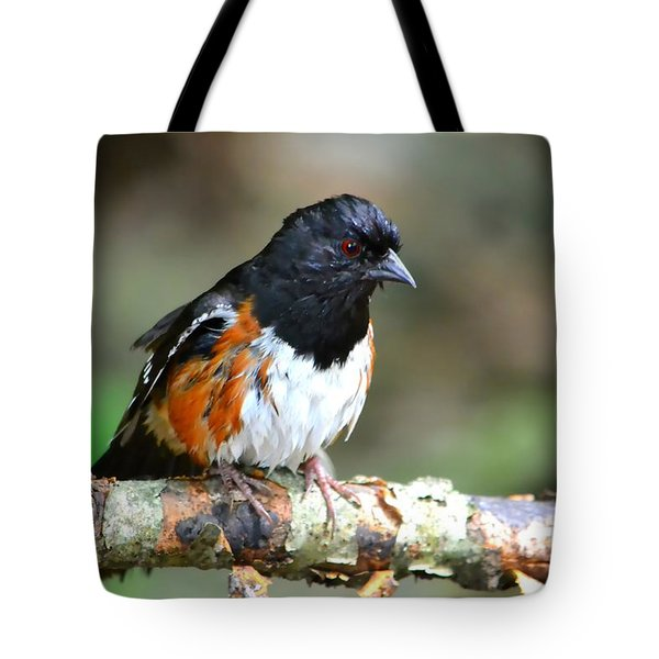 Rufous Sided Towhee Tote Bag by Deena Stoddard