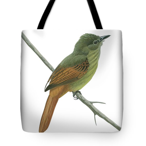Rufous Tailed Flatbill  Tote Bag by Anonymous