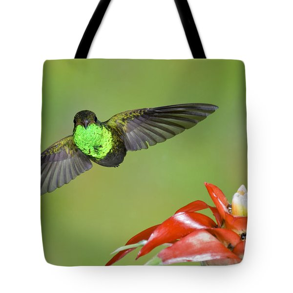 Rufous-tailed Hummer-ecuador Tote Bag by Anthony Mercieca