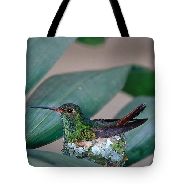 Rufous-tailed Hummingbird On Nest Tote Bag by Gregory G Dimijian MD