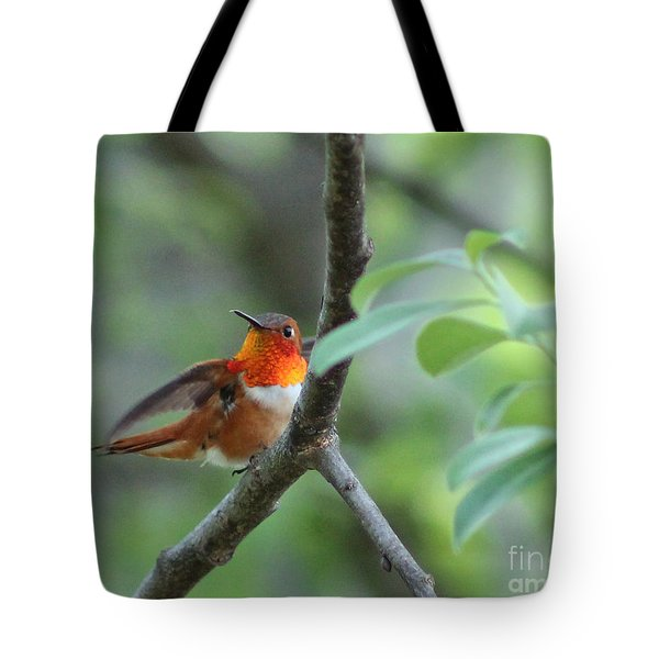 Rufus Hummingbird Tote Bag