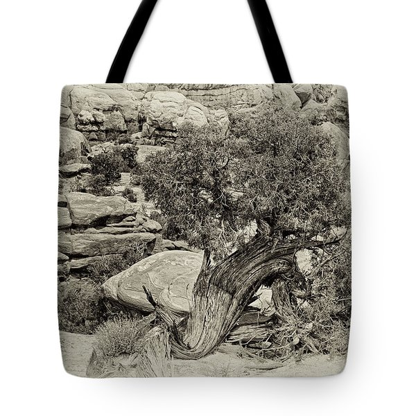 Rugged Tree Tote Bag by Betty Depee