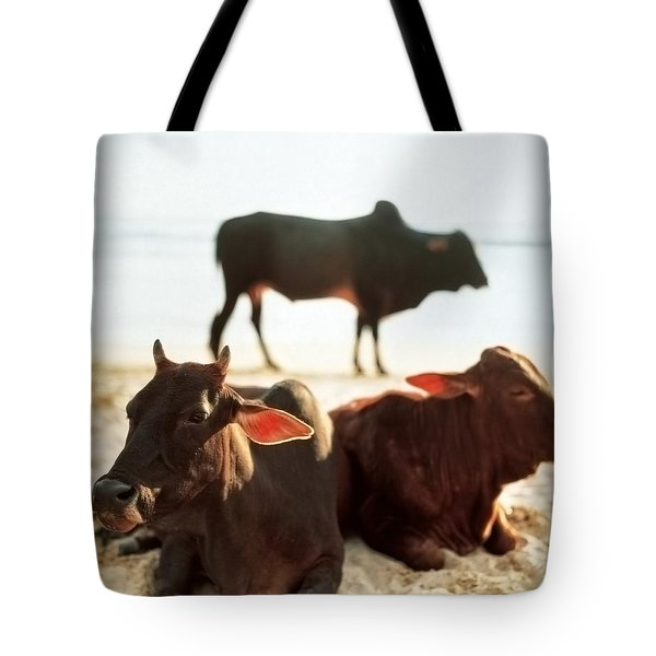 Tote Bag featuring the photograph Sacred Cows On The Beach by Carol Whaley Addassi