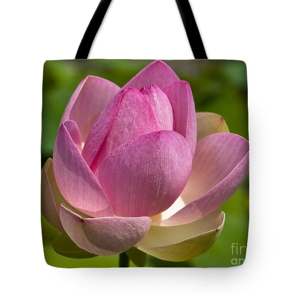 Sacred Lotus Tote Bag