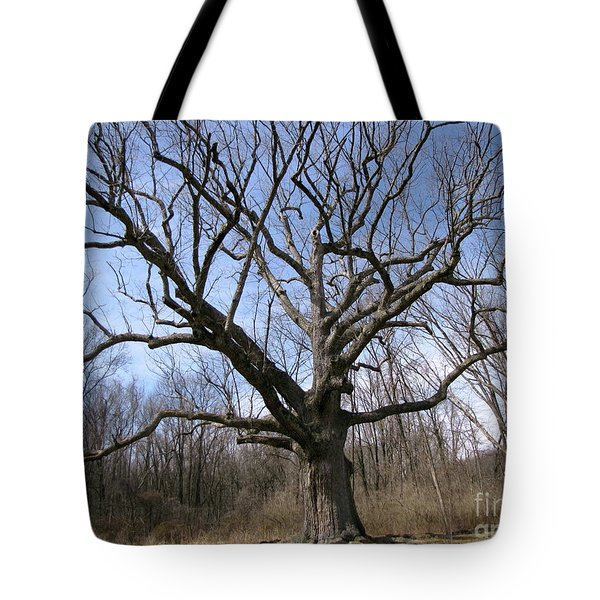 Tote Bag featuring the photograph Sacred Oak 3 by Melissa Stoudt