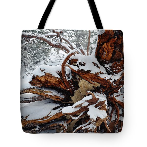Tote Bag featuring the photograph San Jacinto Fallen Tree by Kyle Hanson