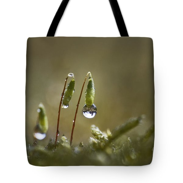 Sanctuary Of Light Tote Bag by Maria Ismanah Schulze-Vorberg
