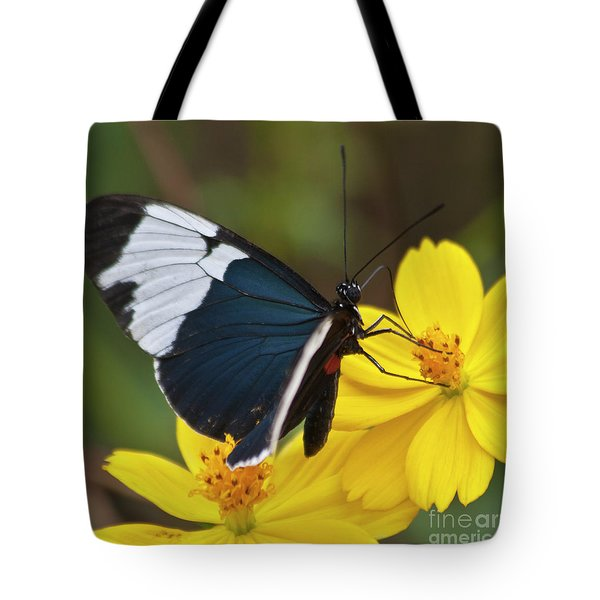 Sapho Longwing Yellow Oriented Tote Bag by Heiko Koehrer-Wagner