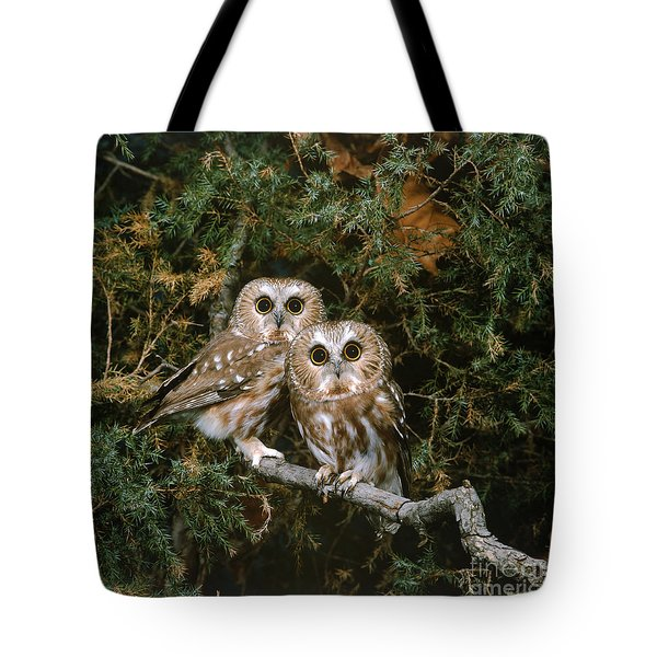 Saw-whet Owls Tote Bag by G Ronald Austing