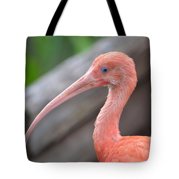 Scarlet Ibis 1 Tote Bag by Richard Bryce and Family