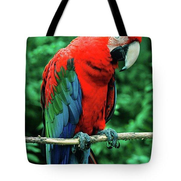 Scarlet Macaw Ara Macao Tote Bag