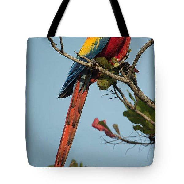 Scarlet Macaw Ara Macao, Tarcoles Tote Bag