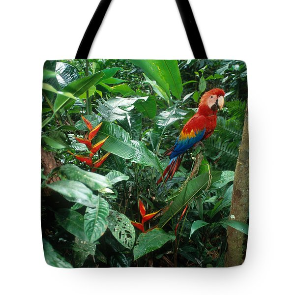 Scarlet Macaw Tote Bag by Art Wolfe