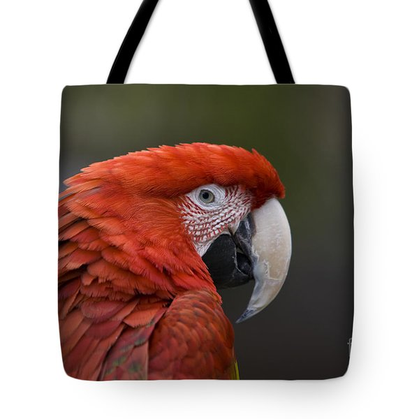 Tote Bag featuring the photograph Scarlet Macaw by David Millenheft