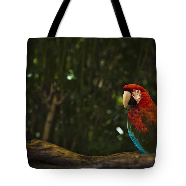 Scarlet Macaw Profile Tote Bag
