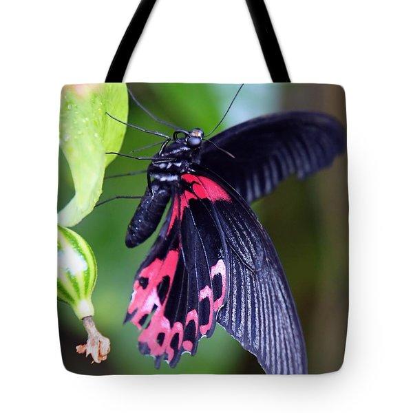 Scarlet Mormon Tote Bag
