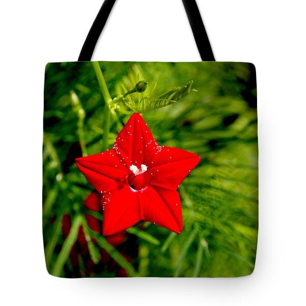 Scarlet Morning Glory - Horizontal Tote Bag by Ramabhadran Thirupattur