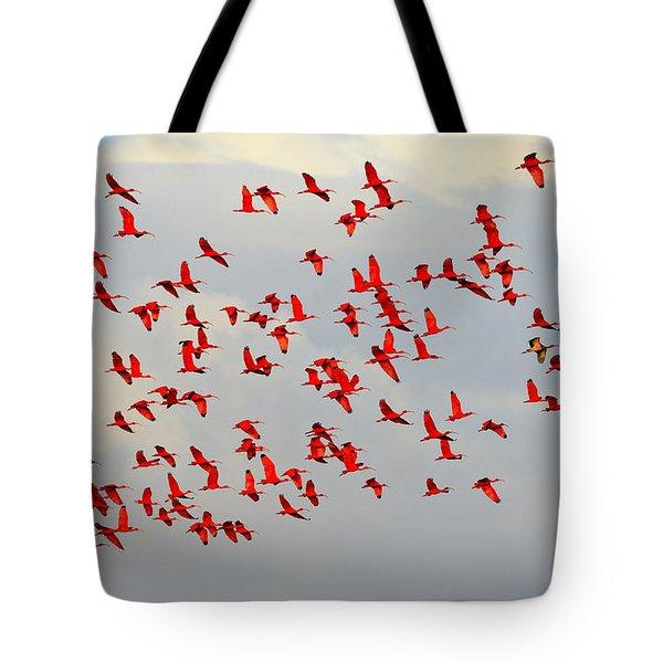 Scarlet Sky Tote Bag by Tony Beck