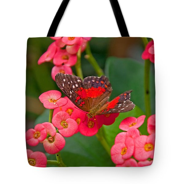 Scarlet Swallowtail Butterfly On Crown Of Thorns Flowers Tote Bag