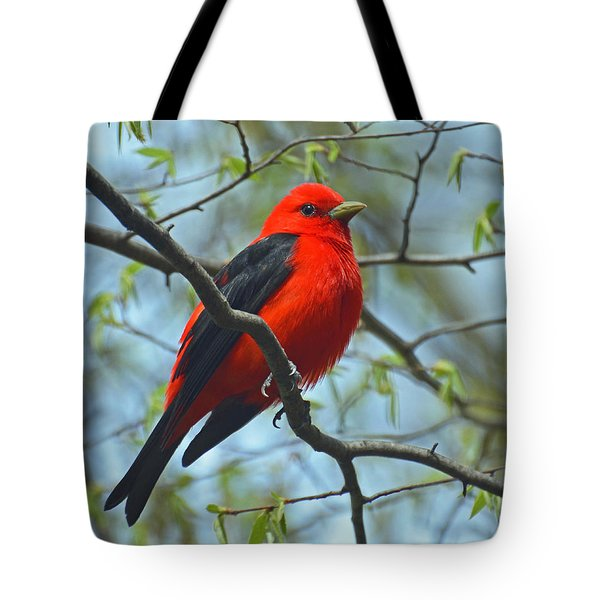 Scarlet Tanager In The Forest Tote Bag
